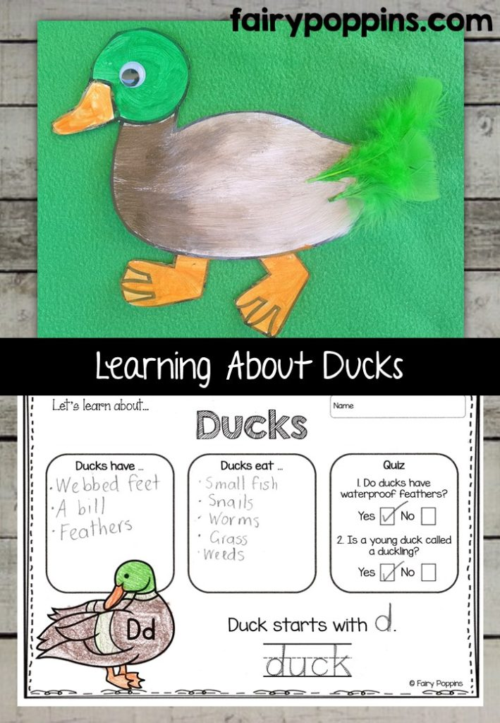 Duck craft template and worksheet activities (labeling, description, writing) - Fairy Poppins